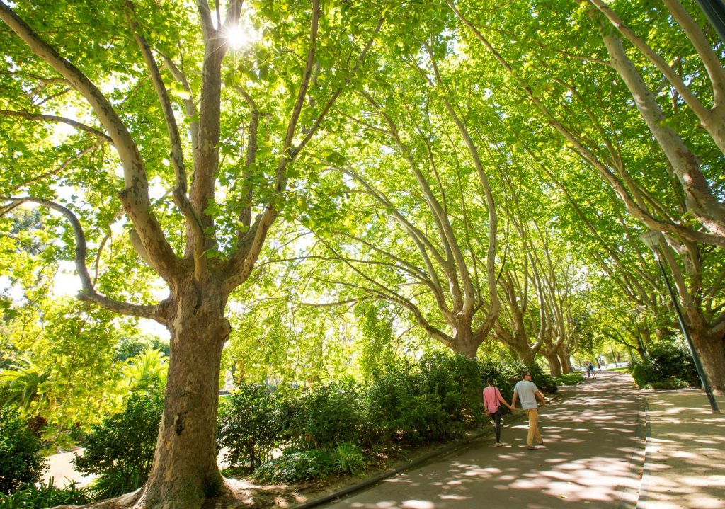 People strolling down a tree-lined path in a beautiful garden