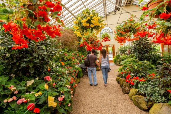 Two people walking in a greenhouse full of flowers