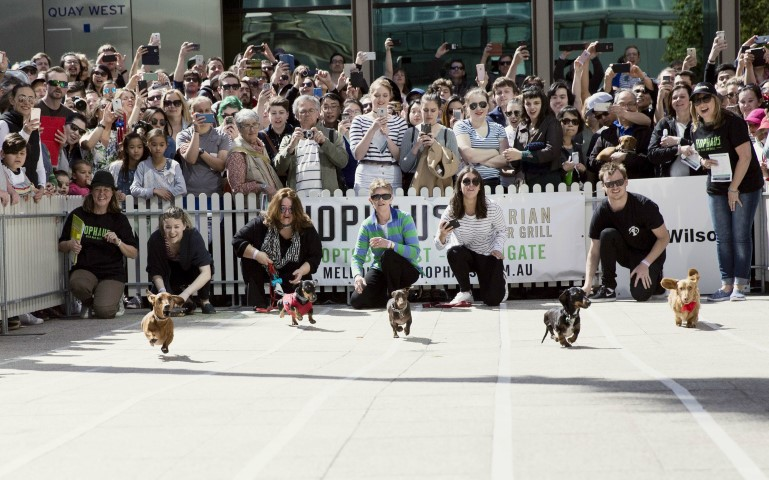 A group of dogs running along a tiny racetrack with a crowd of people watching them