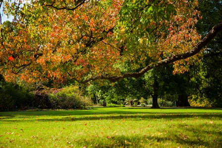 Green grass and autumn leaves in the overhanging tree