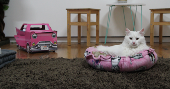 A white cat lounging on a pink cushion