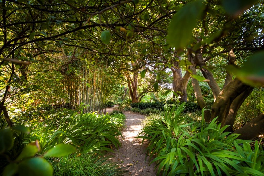 A garden path with overhanging green trees and plants