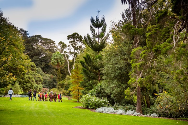 A wide shot showing tall green trees in a grassy garden. A small group of people can be seen in the distance.