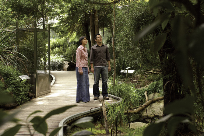 A couple standing on a path surrounded by trees and greenery
