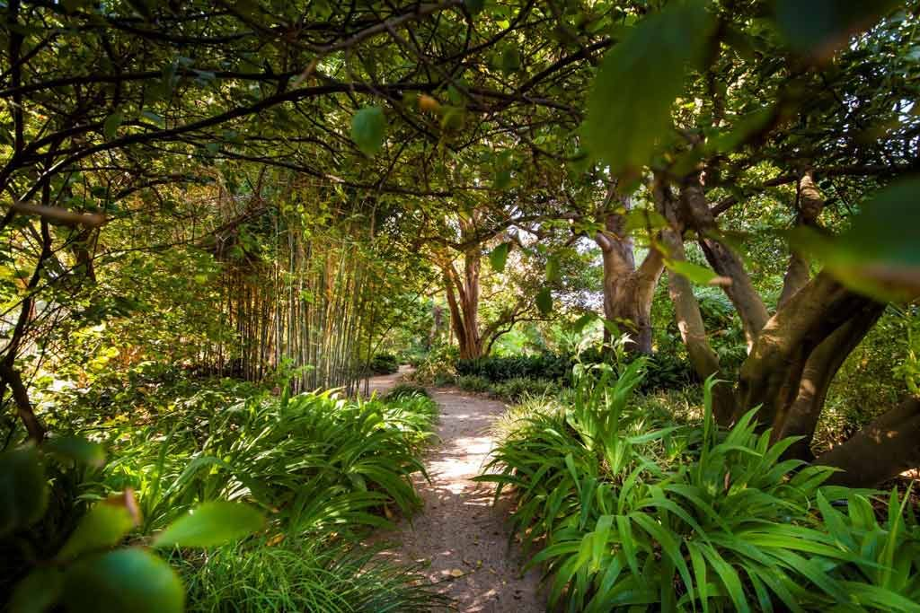 A green garden with sunlight streaming through the leaves