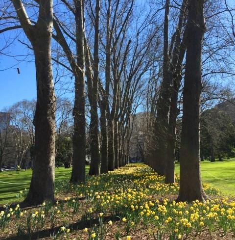 Essential spring walks in Melbourne