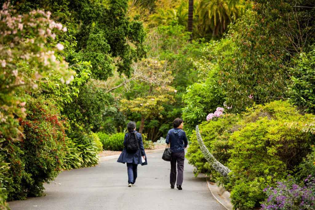 Two people walking along a footpath surrounded by trees and bushes