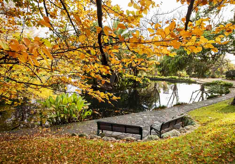 Golden autumnal trees hanging over a park bench in a large open garden