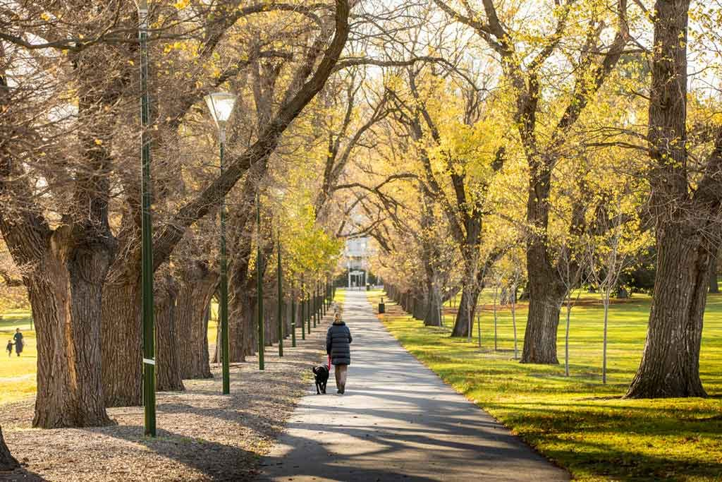 A person walking down a long pathway lined by trees