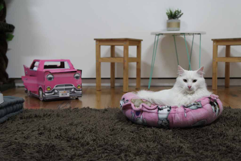A small white cat in a pink bed with toys around it