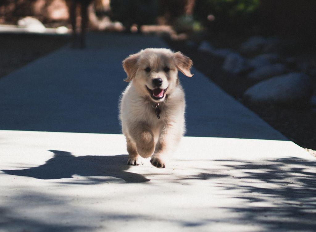 A cute, fluffy puppy running down the street.