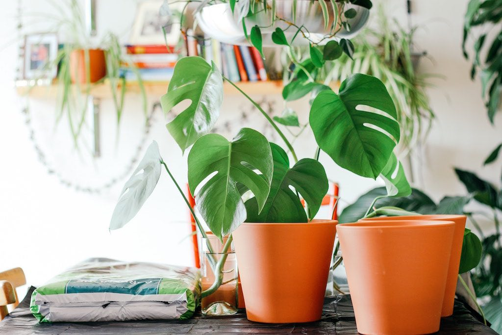 Potted plants on a desk indoors