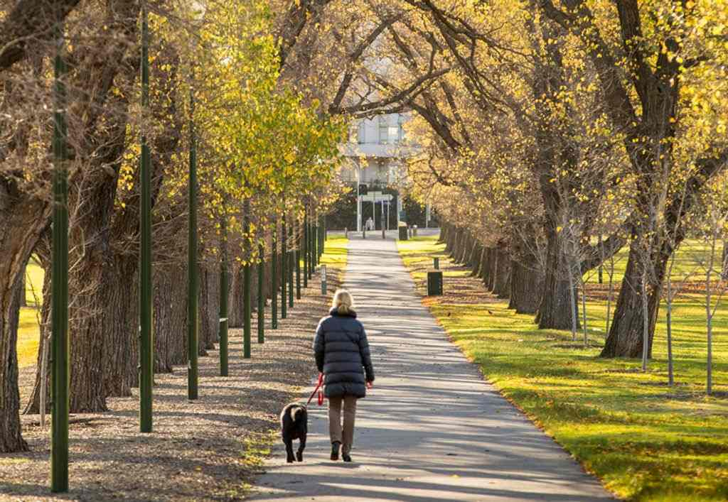 A person walking their dog through a tree lined garden