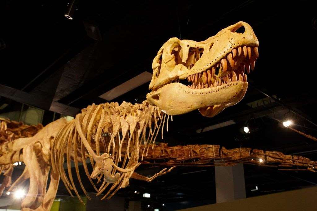 A dinosaur skeleton exhibit