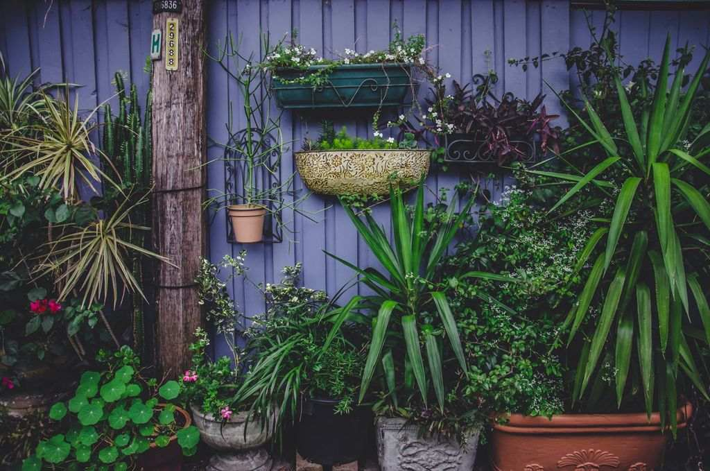 A garden full of plants and hanging greenery