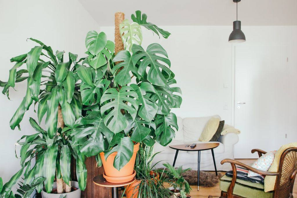 An apartment living room with plants in it