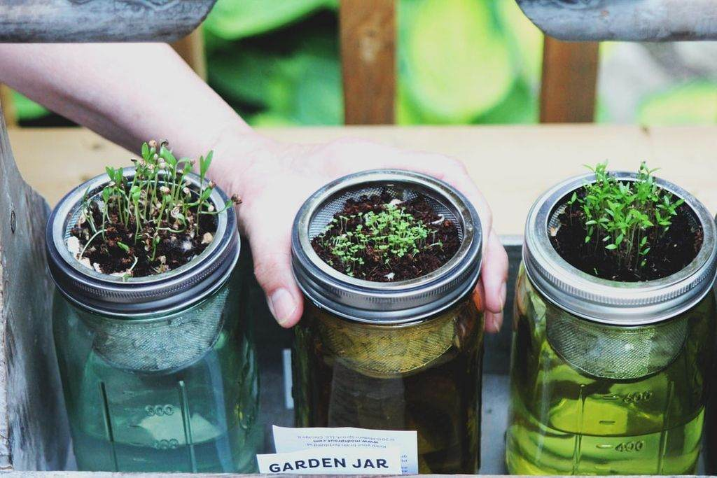 Three jars filled with soil and small sprouts